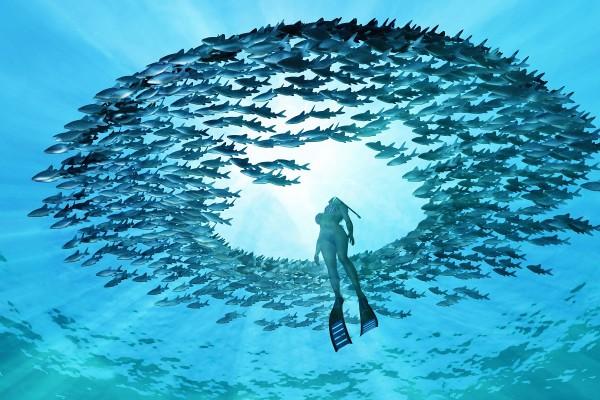 4 ting du skal vide om dykkerure og vandtæthed