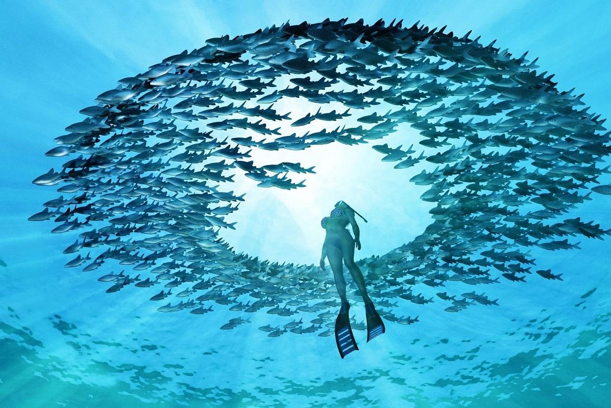 Dykker bevæger sig op gennem en ring af fisk